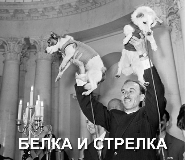 белка_стрелка